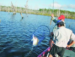 Barra will still be an option in Monduran Dam this month. This fish fell for a test model of the Reaper 110 fished around treetops in deep water.