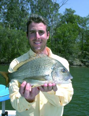 Dave Steirn took this quality kilo-plus bream from Wagonga Inlet on a surface lure.