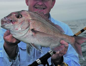 Smaller snapper like this should be pretty common over the reefs this month.