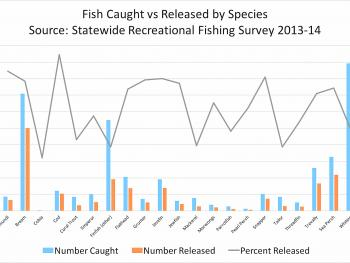 Total catch and total release for common salt species.