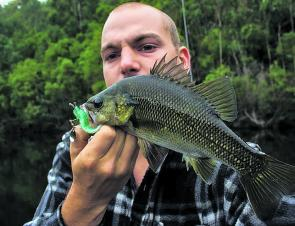Regular correspondent Toby Eastburn with a healthy Blue Rock bass caught on his Dingo Lure soft plastic & spinner combo. These bright plastics have been dynamite on dark water bass.