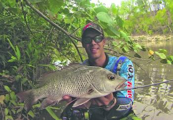 Big mangrove jack will give you the fight of a lifetime. Be prepared to get busted-off before landing a cracker like this!