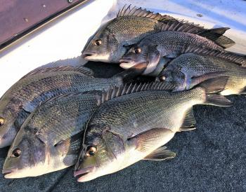 Bream can be finicky, but persistence will pay off.
