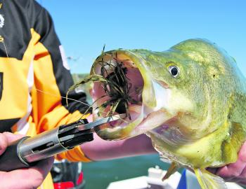 Down the hatch! Skirted jigs are a great option at this time of year, and wind-blown shorelines can concentrate food and fish. Bottom contact is important, so don't be in a rush to move the lure – when you do just use small hops and drags.