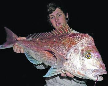 Early season snapper like this ripper held by Tom Capewell are now being caught around the Hay Point area south of Mackay.