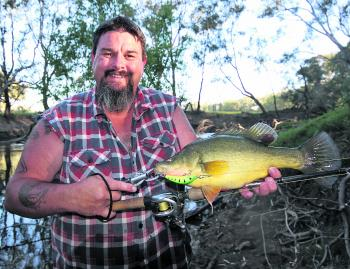 A most unusual catch in Wangaratta, a lovely golden perch that fell to a smaller number 2 StumpJumper back in December.