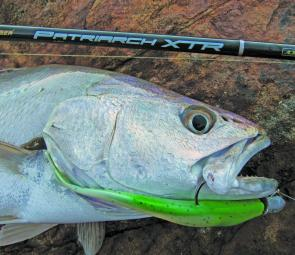 The author's new Pflueger Patriarch rod handled this plastic-munching jewie with ease.