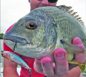 Surface lures are deadly in the shallows, especially early morning and late afternoon around the sand flats.