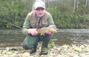 A fast water brown trout taken on a wet fly. Fish the seams between fast and medium flows.
