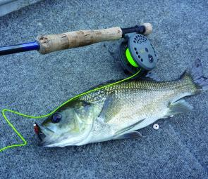 A floating line with a lead-eyed fly cast around a snaggy rock wall was the undoing of this 42cm bass.