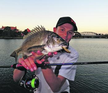 A classic metro bream caught by Jesse Rotin on a Daiwa Wise Minnow in iwana colour from Footscray.