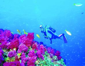 Coffs attractions: scuba diving
