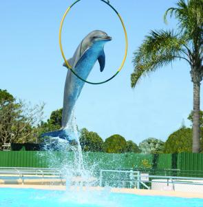 Coffs dolphin attraction.