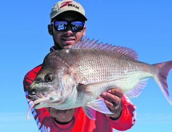 "Snapper are suckers for a well presented soft plastic. The author caught this school size fish on a ZMan 5"" PaddlerZ in coconut ice."