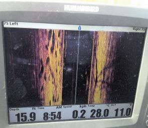 The Humminbird is lit up with barra on the left of the side image (pic from Awoonga Dam courtesy of the Schwerin family). If you've never seen barra on a side-imaging unit before, rotate this picture a quarter turn clockwise and see if you can pick the da