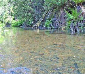 A crystal clear pond on the Gawler River