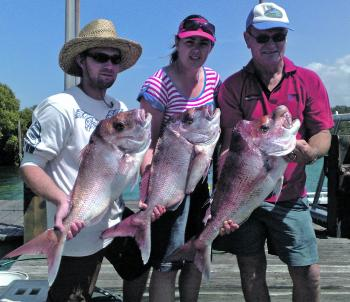 Some good snapper are being caught while live baiting for mackerel.