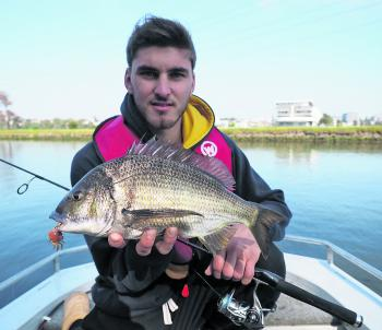 Teaming up with Joel Bramble, Blake Gallagher managed this metro bream flicking a crab imitation at structure on the Maribyrnong River. The stretch of river either side of the entrance to Edgewater, and indeed the lagoon itself has been particularly produ