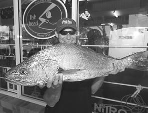"Mick Wall with a 9.2kg jewfish that snaffled a Gulp 2"" Shrimp intended for a flathead."