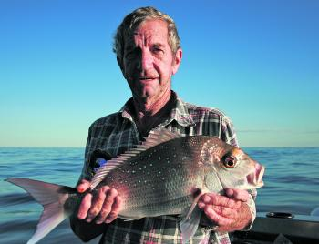 Another pan-sized snapper. Fresh bait is always best for snapper.