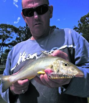 Walk-the-dog lures for tasty whiting this month.