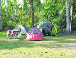 Camping next to the rainforest can mean that a cassowary might join campers for dinner.