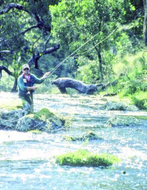 Upstream casting a fly to midstream boulders is a favoured technique with locals.
