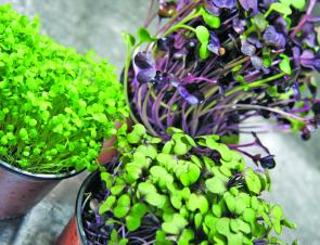 Micro herbs are great for presentation and can add extra flavour.