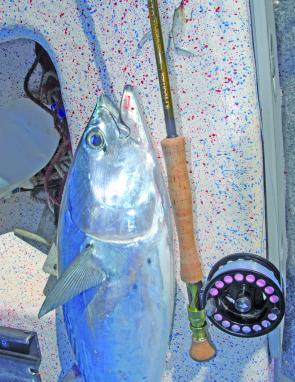 Always remember to match-the-hatch – This mac tuna had been eating small baitfish.