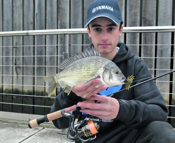 Jason Tanti with a nice 30cm Bream caught on an Olive Cranka Crab using a 2-4kg Wildbait matched with a 2500 Daiwa Exist.