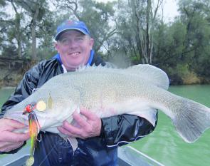 Quite a few nice cod have been landed locally. This one was taken in the rain on a Bassman DT Spinnerbait.