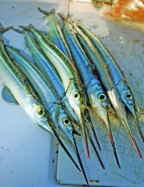 There are plenty of garfish about at the moment; a float rig is the most effective rig to catch them.