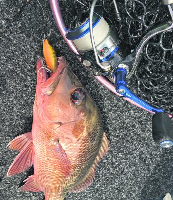 Don't discount fishing surface lures during the day for mangrove jack.