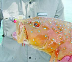 Coral trout are a favourite target in the tropics and the reefs offshore from the resort have plenty on offer.