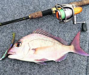 This pinky snatched a soft plastic aimed at bream. They're always a welcome bycatch!