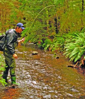 Small creeks in the midst of rainforest are the most beautiful of trout waters.
