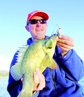 With plenty of golden perch on the chew and good numbers of Murray cod in most local rivers, all looks great for the opening of the cod season on December 1.