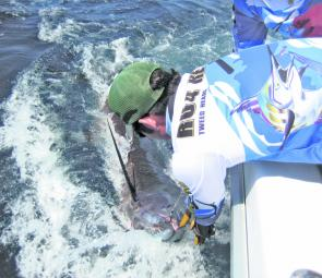Getting the hooks out of a blue marlin of around 200kg on the continental shelf off the Tweed.