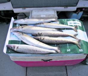 Whiting have still be rounding out a nice bag around the Middle Spit.