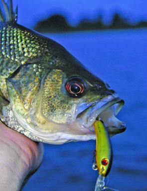 Bibbed minnows with noisy rattles are good options when fishing brown water, although weed can become a real problem.