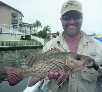 Richard Creighton with a healthy mangrove jack. Now's the time to get into them.