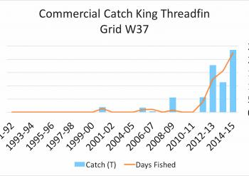 Commercial catch rates from the Brisbane River in the last 25 years.