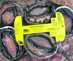 Remember to measure abalone at the widest part of the shell, regardless of whether it is whole of damaged.