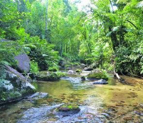You couldn't find a more picturesque place to fish than a rainforest stream.