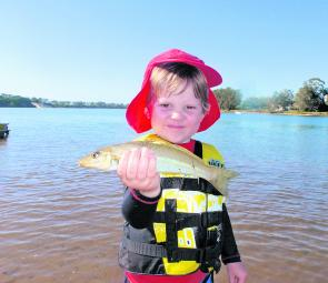 There are plenty of whiting in the estuary and on the beaches. Pumping nippers and fishing a sand bank is a great way to spend a summer day with the kids.