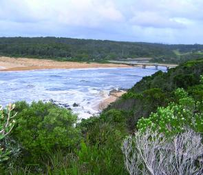 Cuttagee Lake in July 2007 was in full flood – a prawners delight! The lake stayed open to the sea until May 2008 allowing prawn stock to enter the estuary. This became a prime prawning spot during October, November and December 2008.