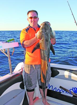 There have been thumper cobia taken at Wide Caloundra this season.