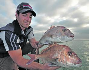 Increasing numbers of pinkie snapper should continue to arrive on the inshore reefs. Sorting through the undersize pickers can be tedious at times, but those willing to persistent are often rewarded with a few keepers.