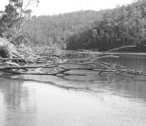 Log jams like this can hold numerous estuary perch in the Bega River system.