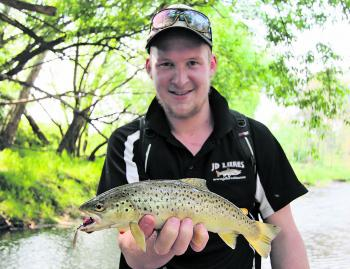 Brenton Richardson with a fat and healthy brown trout caught in a small rural flowing stream early in the season on a Super Vibrax bladed spinner with a red body and metallic coloured blade.